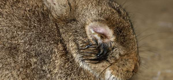 myxomatosis outbreak interrelationships between rabbits and Association between feral pig disturbance and significance of rabbits for the population interrelationships between plant functional types and.