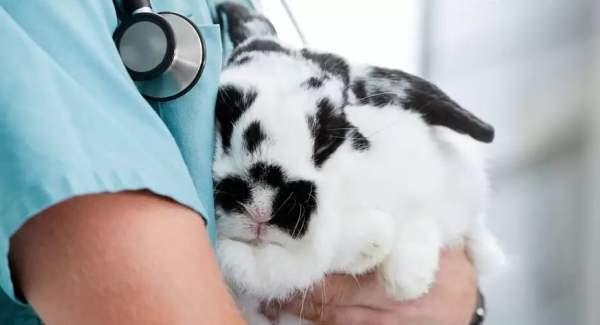 Кастрация и стерилизация кроликов - важные вопросы