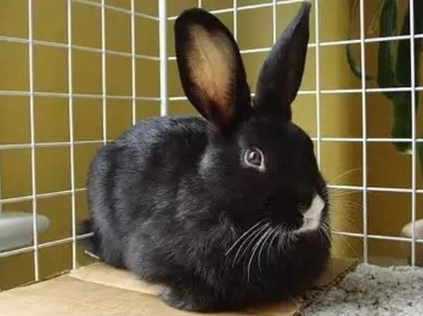 Кастрация кроликов - решение проблем поведения