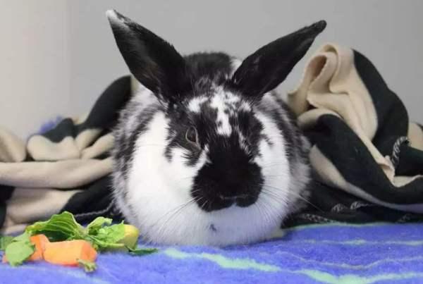 Кастрация и стерилизация кроликов - послеоперационный уход