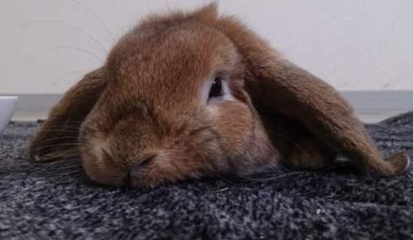 Почему кролик совсем не ест и не пьет?