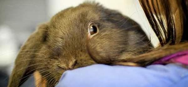 Как делать прививки кроликам самостоятельно