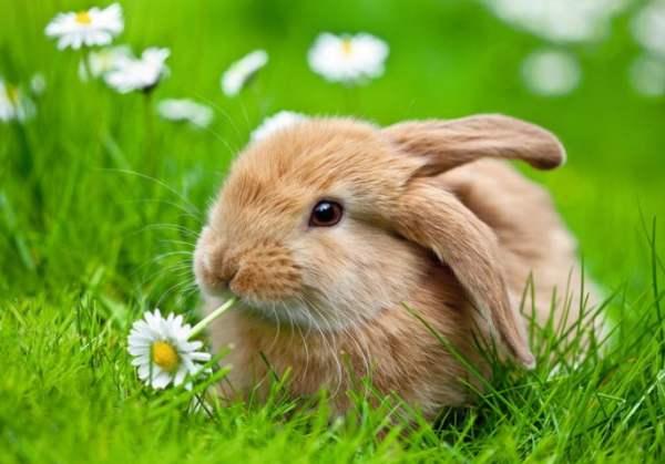 Почему кролик ничего не ест?