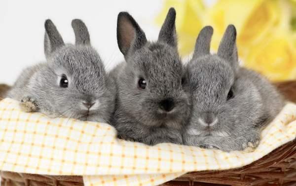 Разведение кроликов: новорожденные крольчата