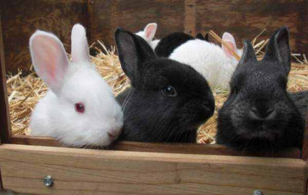 Новорожденные крольчата: особенности ухода