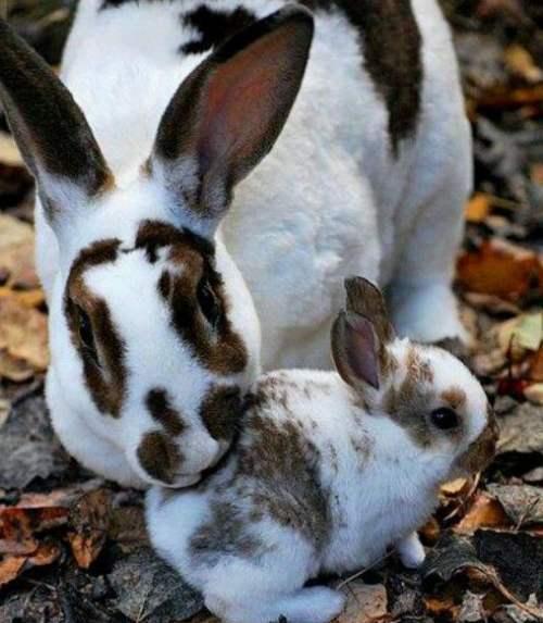 Отлучение крольчат от матери
