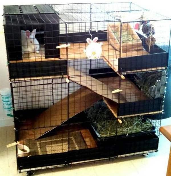 Сухой корм для кошек (зоотовары) купить в Санкт-Петербурге