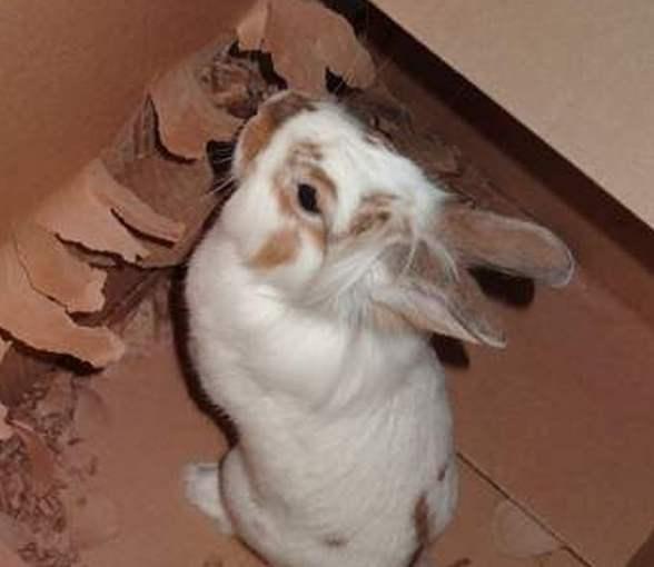 Игрушки для кролика своими руками