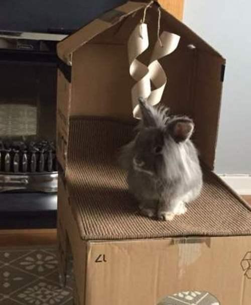 Домик из коробок для кролика