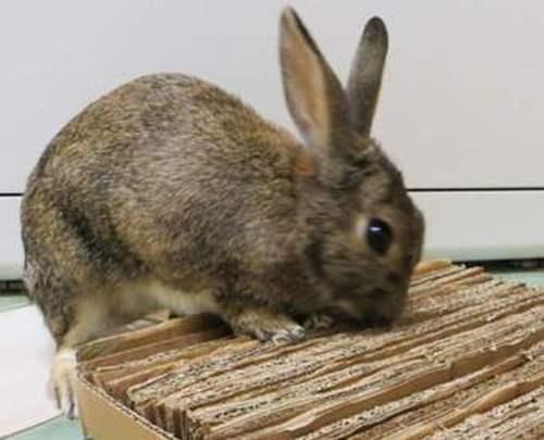 Коврик-мат из картона для кролика своими руками