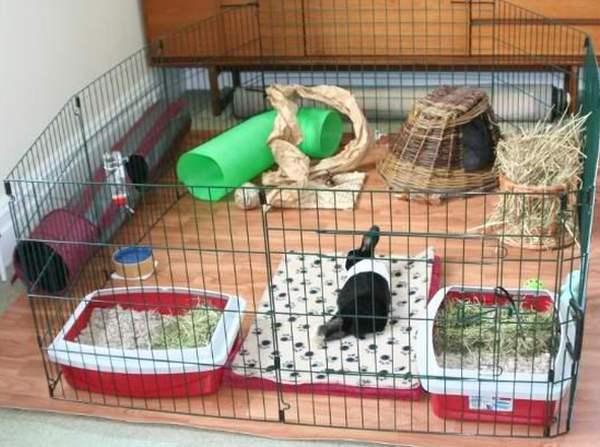 Содержание декоративных кроликов: вольер и комната - Наши Кролики