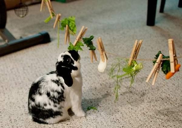 Декоративные кролики: уход и содержание в домашних ... Декоративные Кролики Уход
