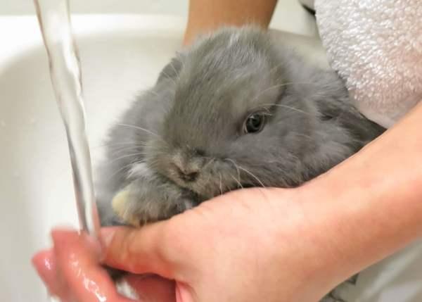 Кролики как за ними ухаживать в домашних условиях 842